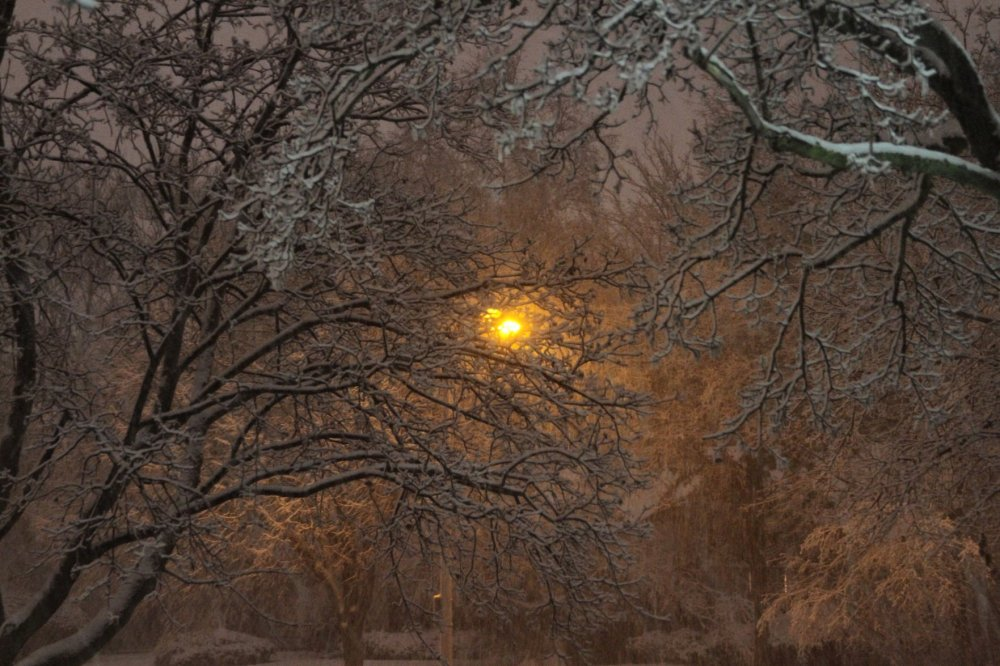 December_2009_Blizzard_Streetlight_through_snow_and_trees_7_soul-amp