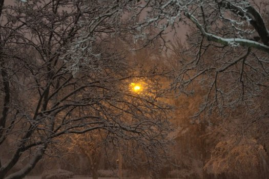 December_2009_Blizzard_Streetlight_through_snow_and_trees_7_soul-amp